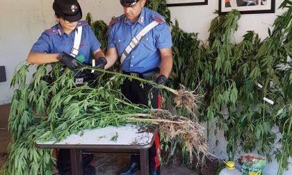 Bollate, eroina in casa e buoni fruttiferi da 15mila euro rubati: i carabinieri arrestano un 30enne