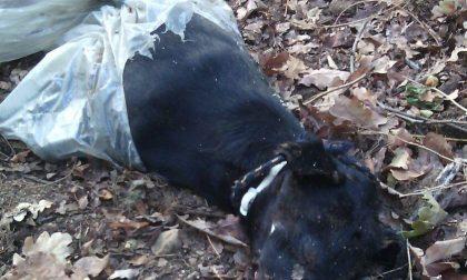 Cerro Maggiore, 4mila euro a chi trova l'assassino del cane