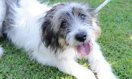 Il cane star Boff abbandonato a Boffalora: a un anno di distanza nessuna traccia dei padroni