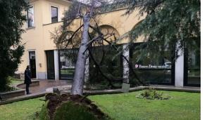 Legnano, albero cade e si schianta sulla banca