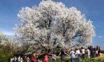 Legnano, torna la Festa dell'albero