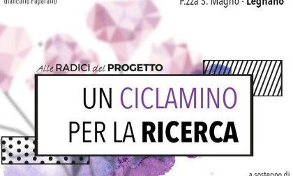 """Legnano, """"Un ciclamino per la ricerca"""" in ricordo di Giancarlo"""