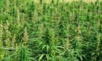 Torta a base di marijuana, due giovani in ospedale