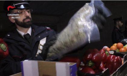 Rescaldina, Vanzago e Rho: smantellato traffico di droga, trovati anche pistole e fucili - Guarda il VIDEO