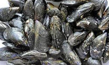 Rho, La Polizia locale blocca un carico di cozze destinate ai ristoranti della città