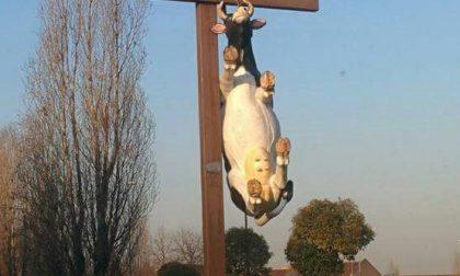 Rho, mucca impiccata alla rotonda dell'autostrada