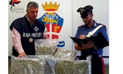 Riforniva il parco delle Groane di cocaina e marijuana, arrestato
