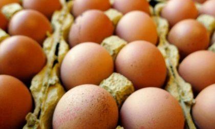 Uova contaminate al fipronil: nessun pericolo nel Milanese