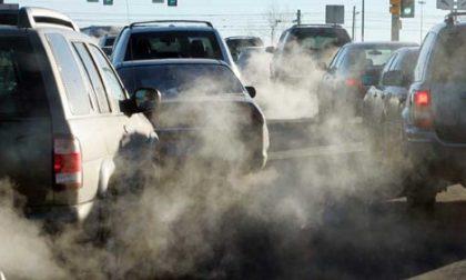 Lo smog uccide anche gli animali: i dati