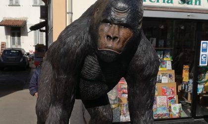 """Scimmia """"a spasso"""" in piazza San Vittore"""