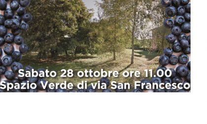 Orti in Lombardia, Vedano vince il bando e pianta mirtilli
