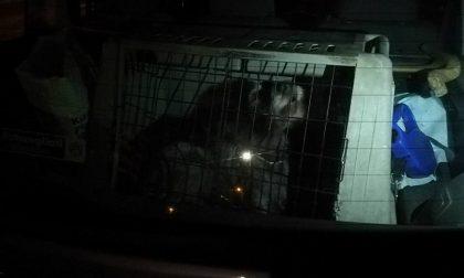 Cane abbandonato in auto: intervengono i vigili