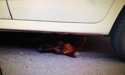 Cane muore travolto da due auto