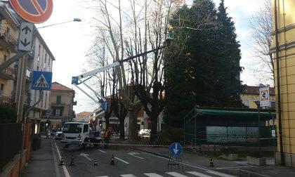 Potatura  alberi in piazza Mazzini, centro di Tradate bloccato alle auto