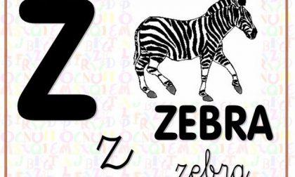 La maestra corregge zebra con zebbra