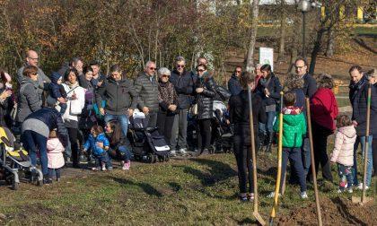 Parco degli Aironi: l'albero dei nuovi nati arriva a Gerenzano