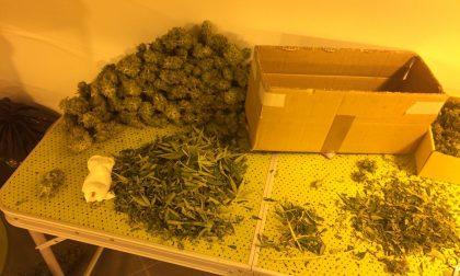 Coltivavano marijuana nel seminterrato: arrestati
