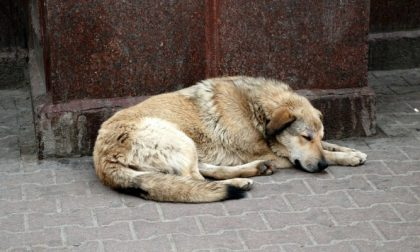 Cane abbandonato nel sottopasso: lo salvano i vigili