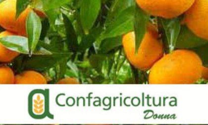 Clementine antiviolenza nelle piazze italiane