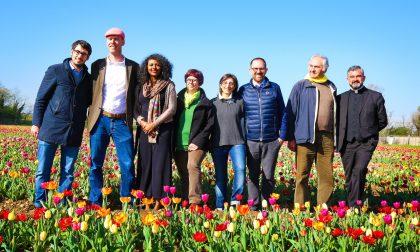 I tulipani tornano a Cornaredo VIDEO