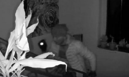 Furto in casa a Besate: le immagini del ladro in azione VIDEO