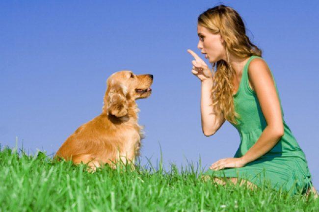 Patentino per proprietari di cani: corsi a Vermezzo