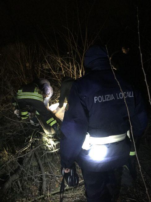 Cervo del Parco del Ticino investito e ucciso
