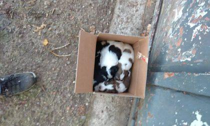 Abbandona quattro cuccioli tra umidità e pipì