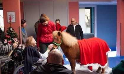 Pony in visita agli ospiti dell'Hospice per Santa Lucia