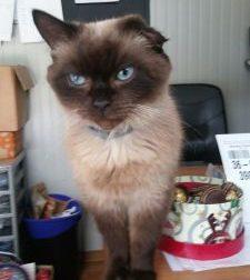 Gattile: appello dei volontari per ritrovare Tonio