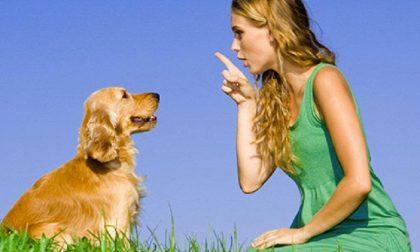 Patentino del cane buon cittadino, corsi gratuiti per ottenerlo