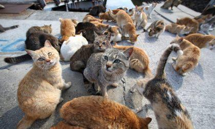 Gatti abbandonati, il Comune cerca aiuto