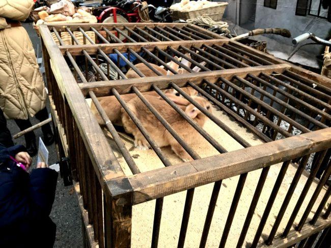 Sagra di Sant&#8217&#x3B;Antonio la protesta degli animalisti