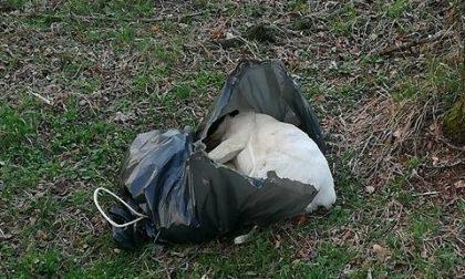Cani e polli morti nei sacchetti: un cucciolo è stato strozzato con un cappio