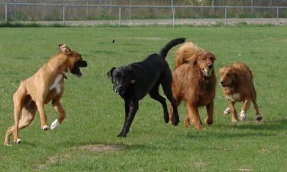 Area cani ad Albairate: incontro con i candidati sindaco