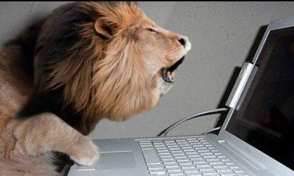 """Vigili usurai"" su Facebook, leoni da tastiera saranno denunciati"