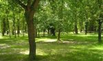 Progetto ForestaMi: 4.115 alberi e arbusti a Gaggiano