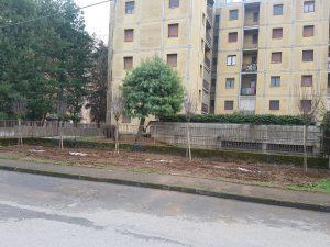 Piantati 79 alberi in città, e gli interventi continuano