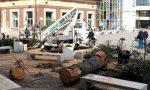 Gaggiano, abbattuti i due cedri in piazza Daccò: è polemica