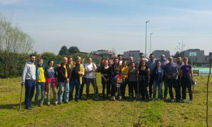 A Cisliano 70 alberi contro lo smog di Milano