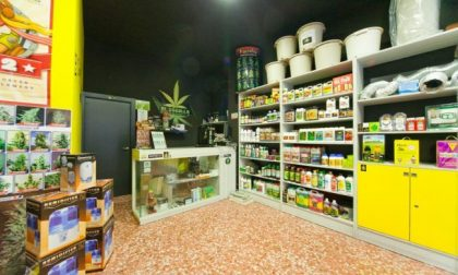 Cannabis al supermercato la scelta di Lidl in Svizzera