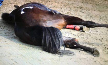 Cavallo si frattura in pista, la Lav chiede l'avvio di un'inchiesta