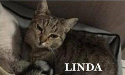 Esplosione Rescaldina, trovato gatto di uno dei sopravvissuti