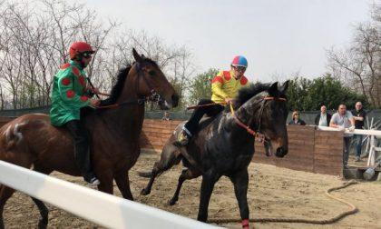 Cavallo morto: annullate le corse di addestramento del 22 aprile