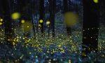 La magia delle lucciole: incontro alla biblioteca di Gaggiano