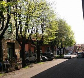 """S. Vittore Olona, via Matteotti: """"Mobilitiamoci contro il taglio degli alberi"""""""