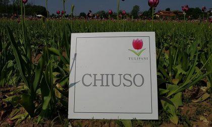 Chiuso il campo di tulipani a Cornaredo