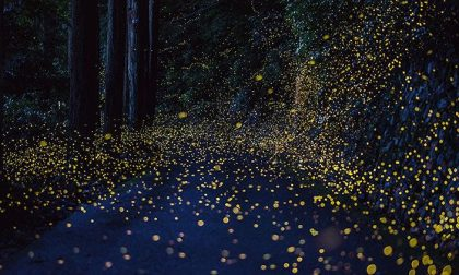 """Lucciole, """"Notti magiche"""" al Bosco dei 100 Passi di Gaggiano"""
