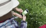 Bioblitz: scienza partecipata al Parco Pineta