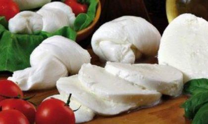 Mozzarella di bufala contaminata da listeria